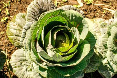 Curso introducción a la agricultura ecológica