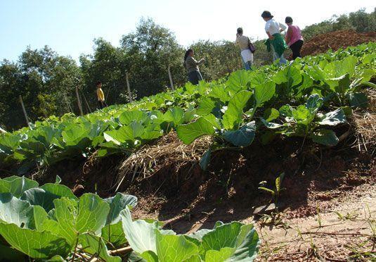 Curso completo de agricultura ecol gica huerteamos for Rotacion cultivos agricultura ecologica