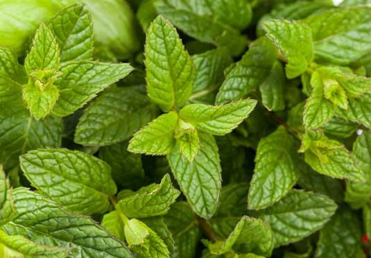 Cultivo de plantas aromticas curso plantas arom ticas y for Jardinera plantas aromaticas