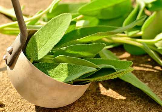 cultivo-usos-plantas-medicinales