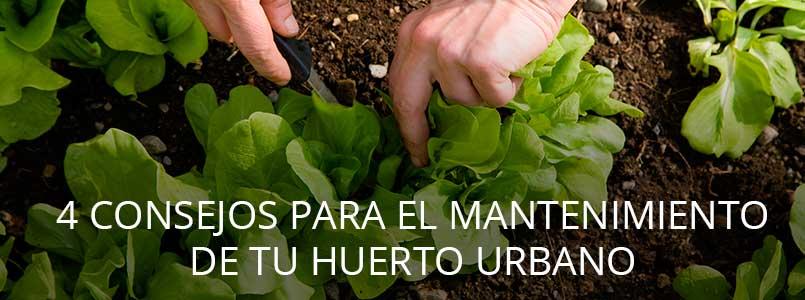 4-consejos-mantenimiento-huerto-urbano