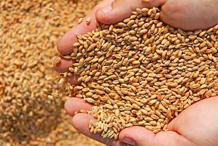 curso producción de semillas
