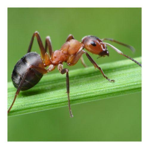 Curso de control ecológico de plagas