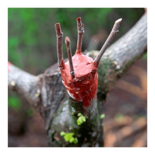 Curso de Reproducción de plantas