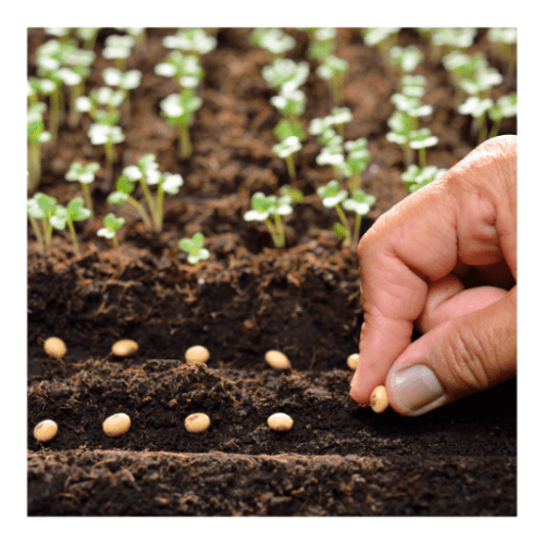 Curso de Recolección de semillas