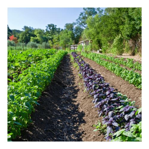 Curso de asociación de cultivos